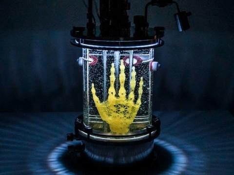 Американская художница выращивает руку из стволовых клеток