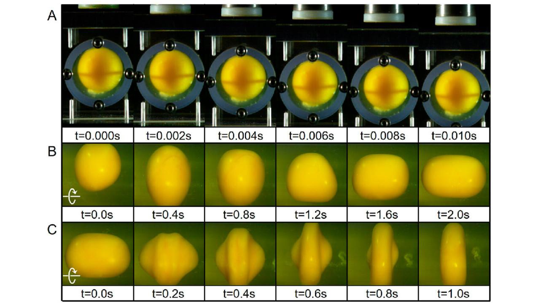 Куриное яйцо помогло понять, какой удар вызывает наиболее сильное сотрясение мозга