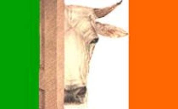 Коровьим бешенством впервые заразился житель Ирландии