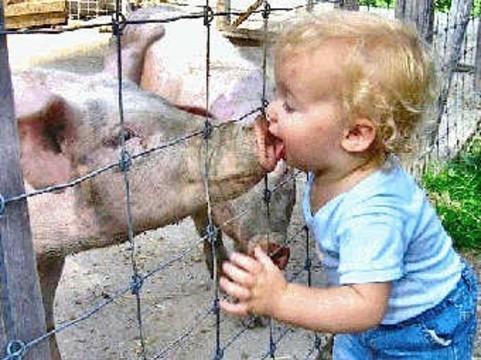 «Свиным гриппом» на Камчатке [заразились четыре человека]