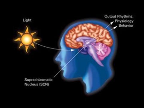 Биологические часы страдающих депрессией [оказались нарушены на клеточном уровне]