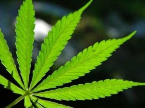 [Американцы опровергли] теорию перехода с марихуаны на другие наркотики