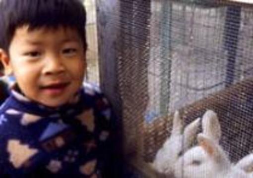 Китайцы создали гибрид кролика и человека