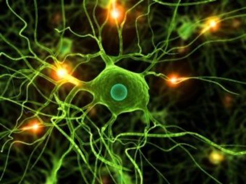 Минута из жизни нейрона