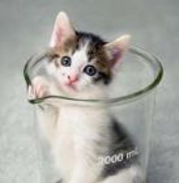 Американцы налаживают массовое производство кошек-клонов