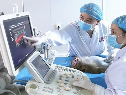 Распечатанные на 3D-принтере сосуды успешно имплантировали животным