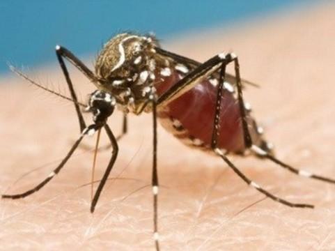 Генно-модифицированные комары [защитят бразильцев от вируса денге]