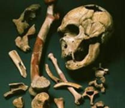 Неандертальцы не стали предками человека и завели эволюцию в тупик