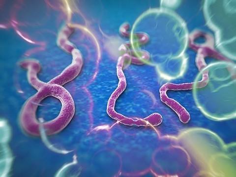 В Гвинее вылечили от Эболы 19-дневного младенца