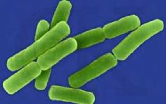 Прохладительные напитки оказались заражены опасными микробами