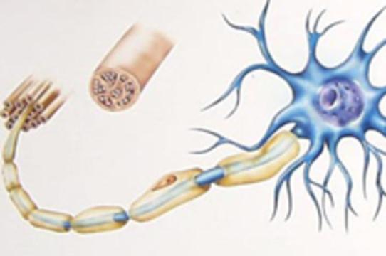 Ремиелинизация восстановление миелина