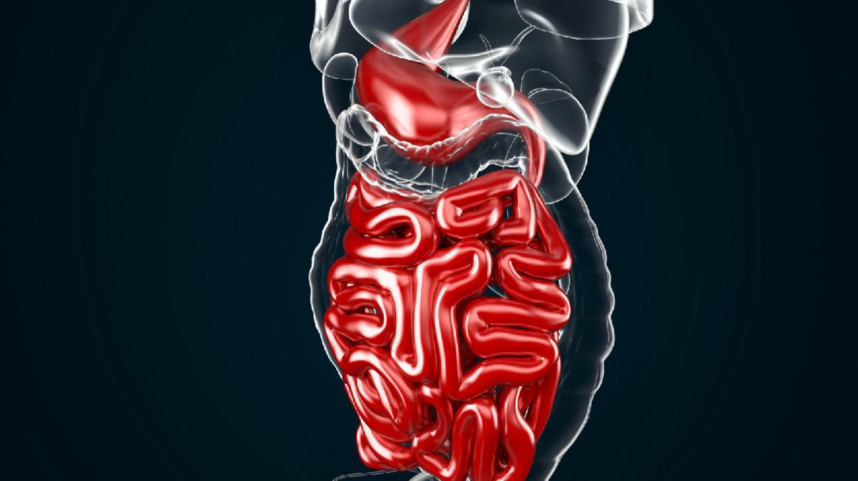 Особенности микробиоты кишечника связали с риском тяжелого и длительного течения COVID-19