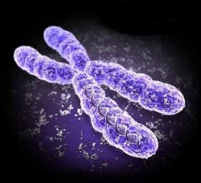 Истинно женская Х-хромосома больше всего вредит мужчинам