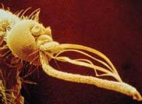 Безболезненные иглы скопируют с комаров