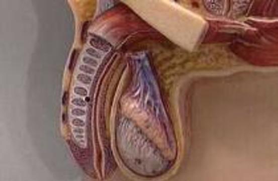Яички можно годами хранить в жидком азоте