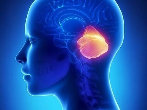 Найдена новая функция мозжечка — творческое мышление