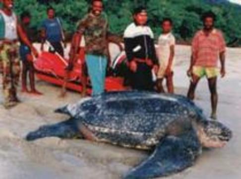 Жители камбоджийской деревни отравились мясом пойманной черепахи