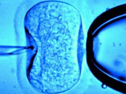 Зачатие в пробирке [нарушает работу генов]