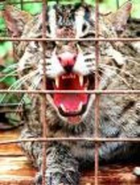 """Источником вируса SARS оказалась съедобная """"дикая кошка"""""""