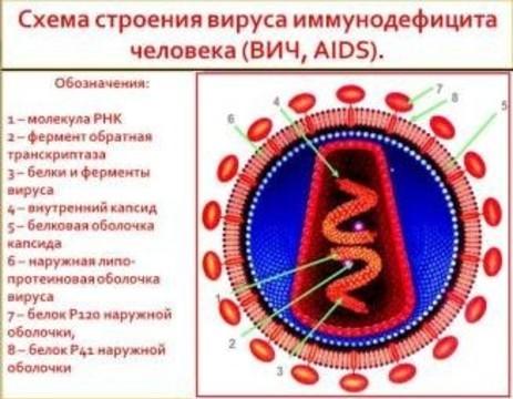 Почти каждый двухсотый россиянин [заражен ВИЧ]