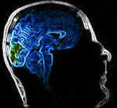 Обнаружено, что за воображение и узнавание отвечают разные части мозга