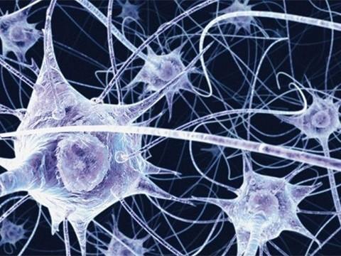 Родители отдали мозг умершего сына-аутиста для исследования