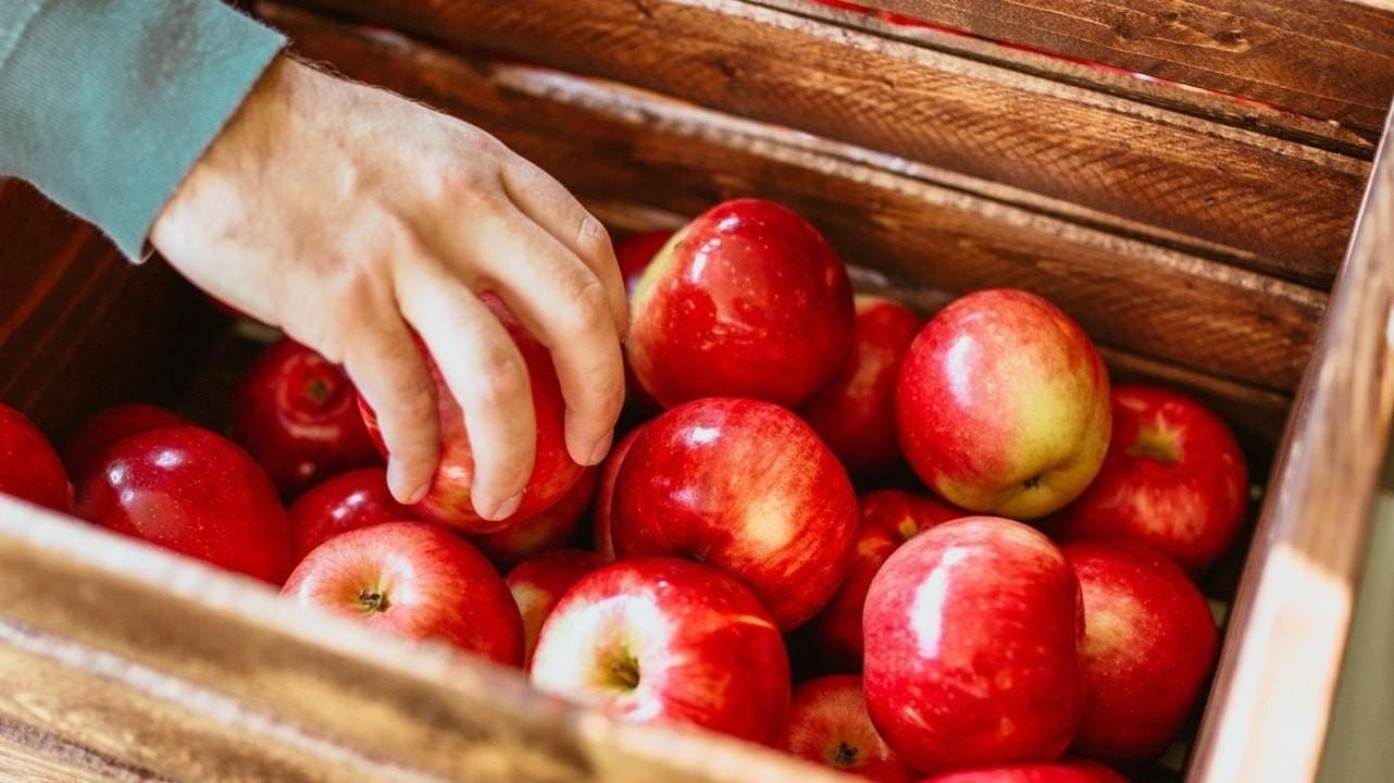 Яблоко на ужин — и доктор не нужен?