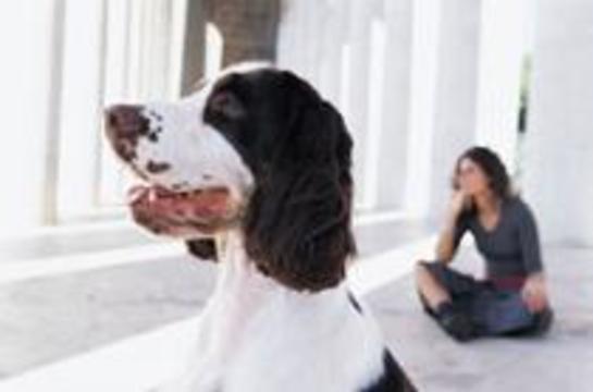 Собаки способны учуять раковую опухоль