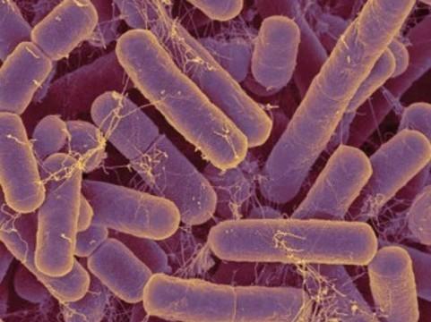 Микробиологи пообещали [терапию аутизма пробиотиками]
