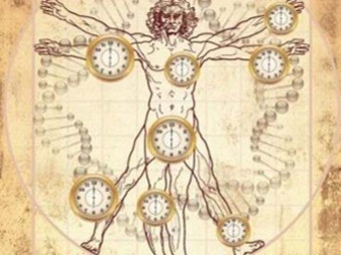У каждой части человеческого организма нашли [свою скорость старения]