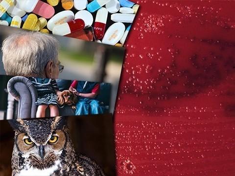 Новый способ сделать вакцины эффективнее и немного о пользе кошек