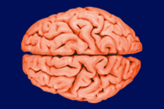 Британские ученые призвали граждан завещать свой мозг [для исследований паркинсонизма]