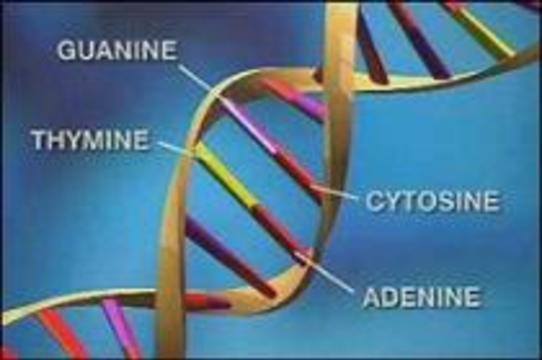 Составлены полные генетические карты 9-ой и 10-ой хромосом человека