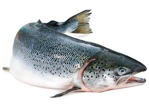 Американцам разрешили употреблять в пищу генно-модифицированную рыбу