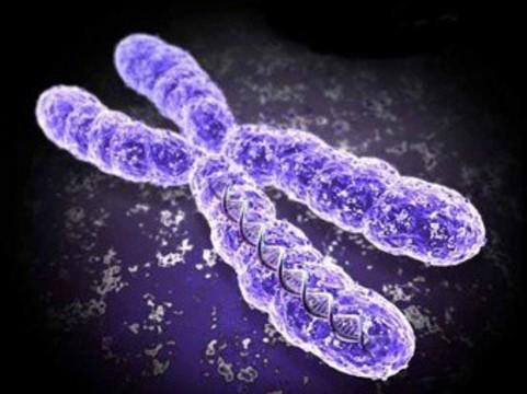 На женскую половую хромосому [возложили ответственность за мужское бесплодие]