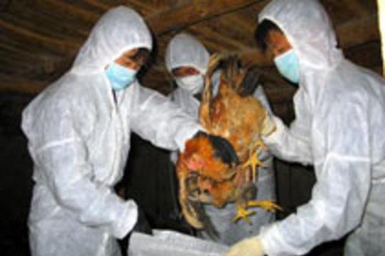 Япония официально [подтвердила вспышку птичьего гриппа]