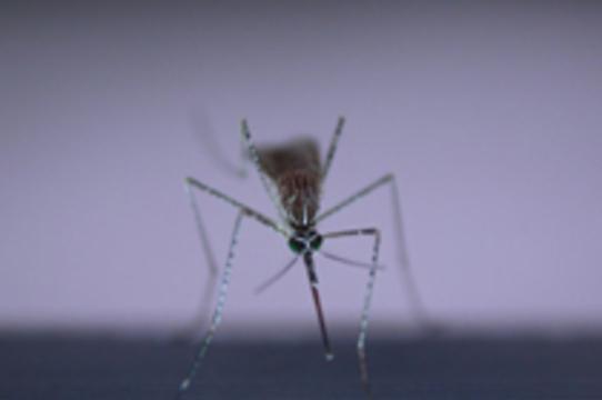 В Латинской Америке свирепствует [лихорадка денге]