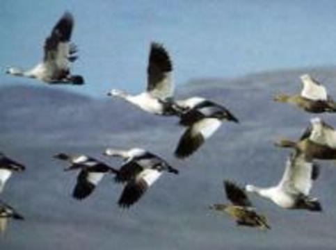 В Китае объявлено чрезвычайное положение по птичьему гриппу