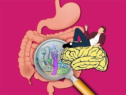 Как наше поведение связано с бактериями кишечника