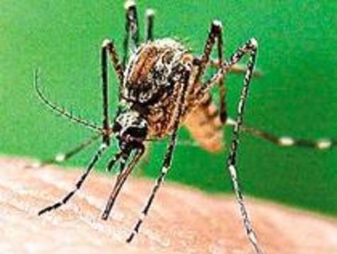 """""""Невкусные"""" люди не боятся комаров"""