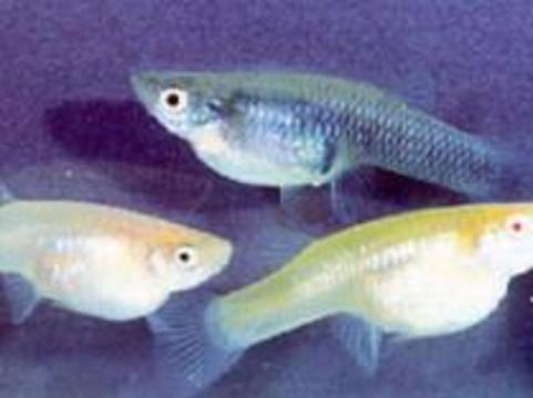Здоровье американцев будут охранять рыбы и микробы