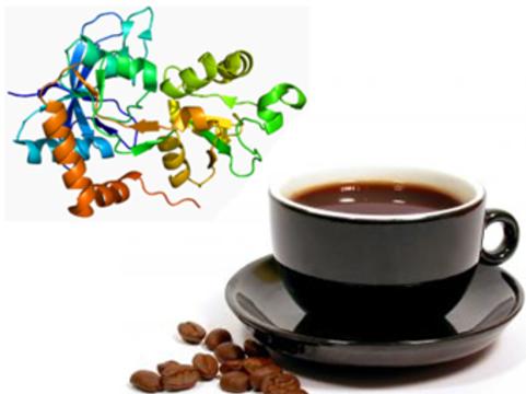 Генетики объяснили [профилактический эффект кофе при паркинсонизме]