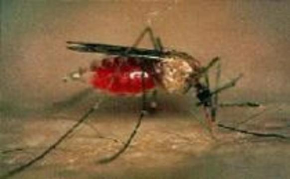 В Бурунди эпидемия малярии унесла 818 жизней