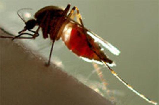 Австралийский ученый заразился лихорадкой денге [в лаборатории]
