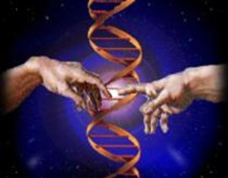 Теория эволюции подверглась нападкам креационистов