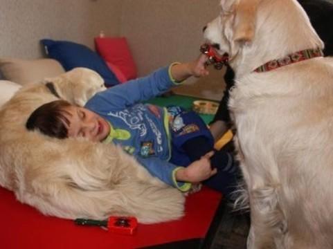 [Для реабилитации детей-инвалидов] будут использовать собак