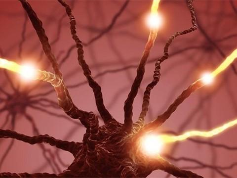 Большинство нейронов, реагирующих на боль, чувствительны к определенным типам раздражителей