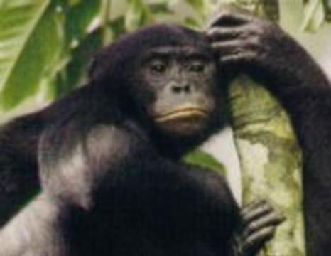 Человек научился смеяться еще обезьяной