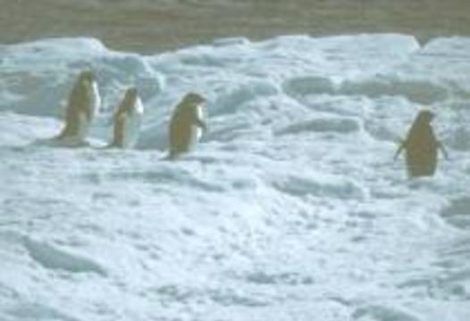 В Антарктиде доисторические бактерии живут уже несколько миллионов лет