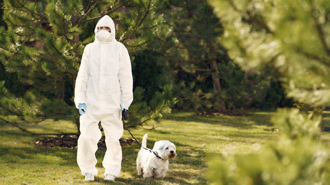 СМИ: собаки могут с высокой точностью обнаруживать SARS-CoV-2 по запаху пота